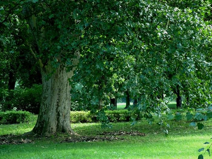 Hlohovec_park509.jpg