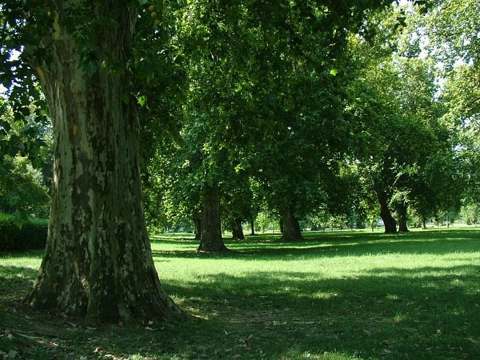 Hlohovec_park551.jpg