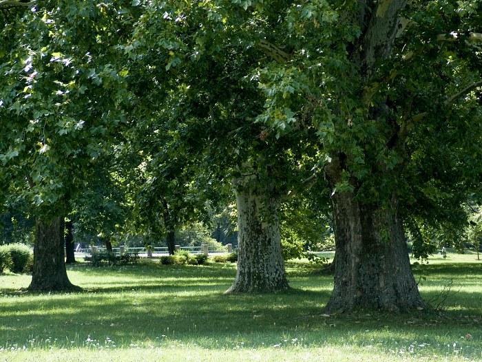 Hlohovec_park564.jpg