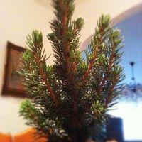Karácsony 2011 - Képek és receptek