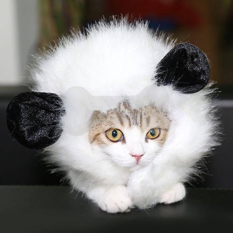 wig-funny-panda.jpg