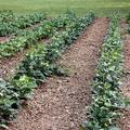 Helyi kistermelői közösségi mezőgazdaság üzleti modellje