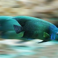 A lassú halakat megeszik, ugye?
