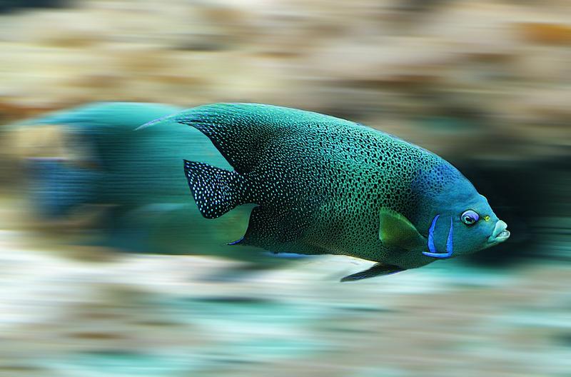 fish-582695_1280.png