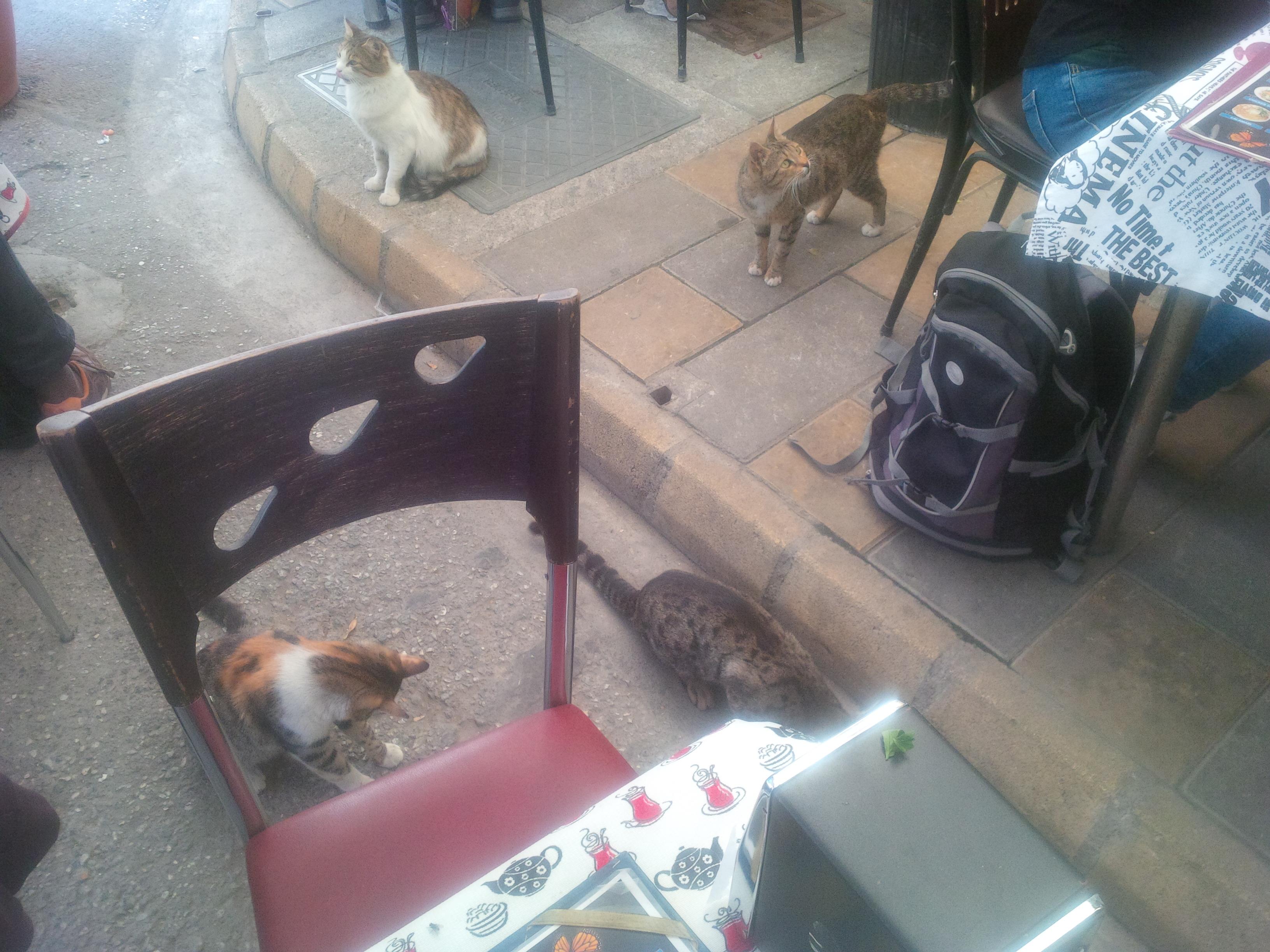 Macskák mindenütt, de főleg az éttermek környékén