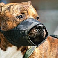 Kutyát pórázon tartani barbárság