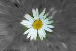 Válóczy Szilvia: A virágnak sem lehet megtiltani