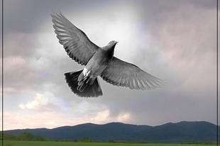 Válóczy Szilvia: Szárnyaidért
