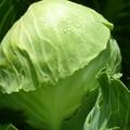 A zöldleveles zöldségekkel töltődjünk fel egészséggel