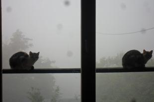 Ködös reggeli várakozás