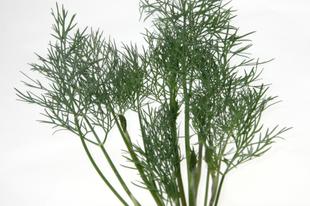 Hasznos zöld fűszerek: kapor, petrezselyem, bazsalikom — hasznos tulajdonságok, gyógyhatások, ellenjavallatok
