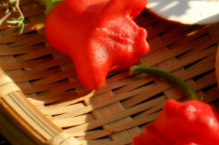 A chili paprika csodálatos tulajdonságai