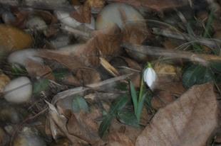 A tavasz első hírnöke a hóvirág, a vetési terv, és egy vegetáriánus diós datolyás gyümölcskenyér
