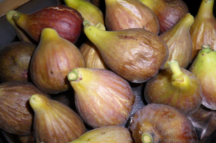 Az első gyümölcsök a földön - mese a fügéről
