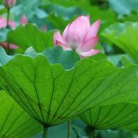Botanical Garden Taipei