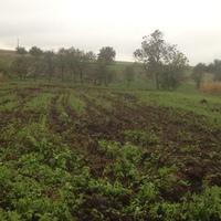 Városi  farm vidékre (is) költözik….