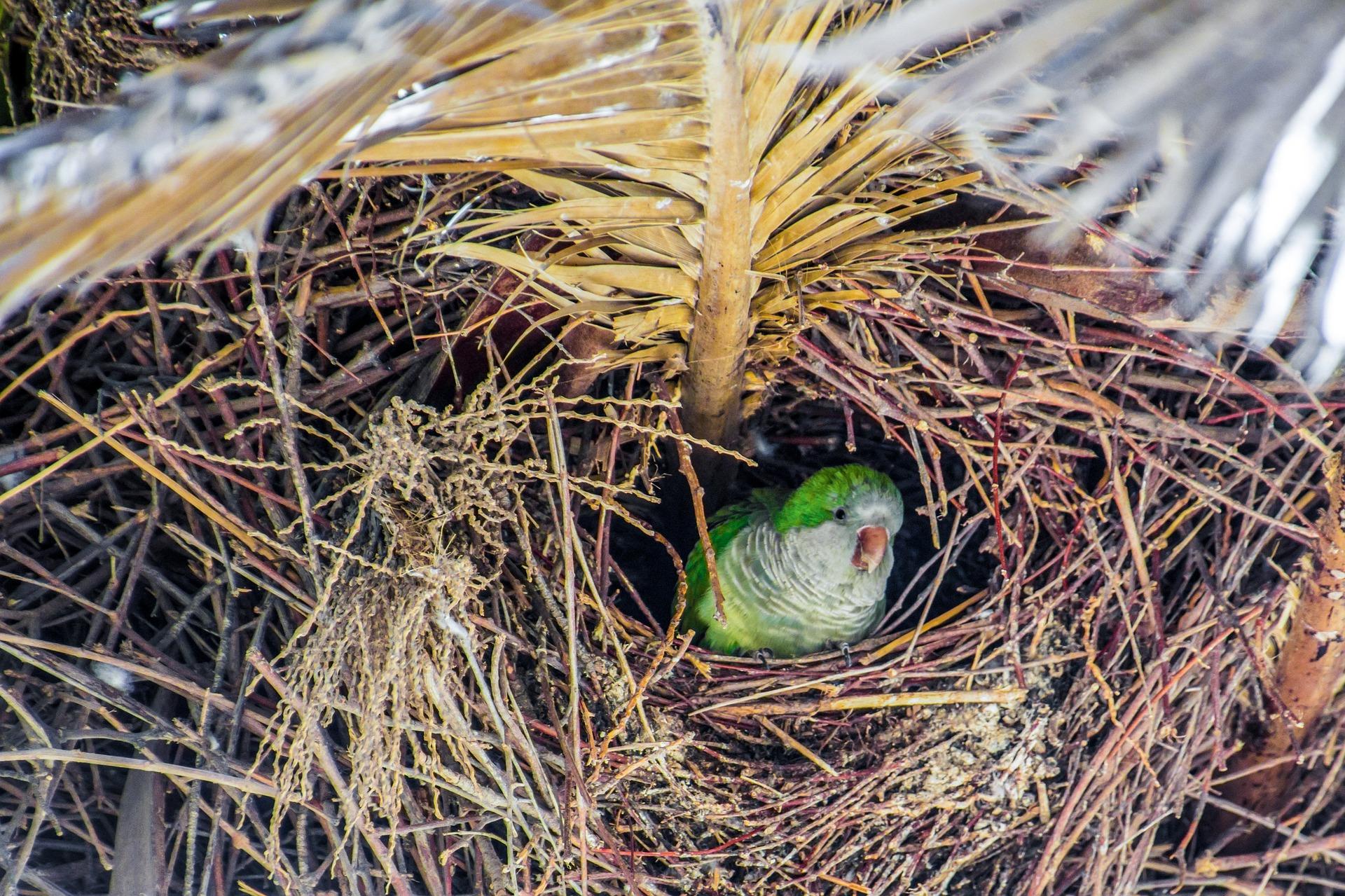 nest-1699356_1920.jpg