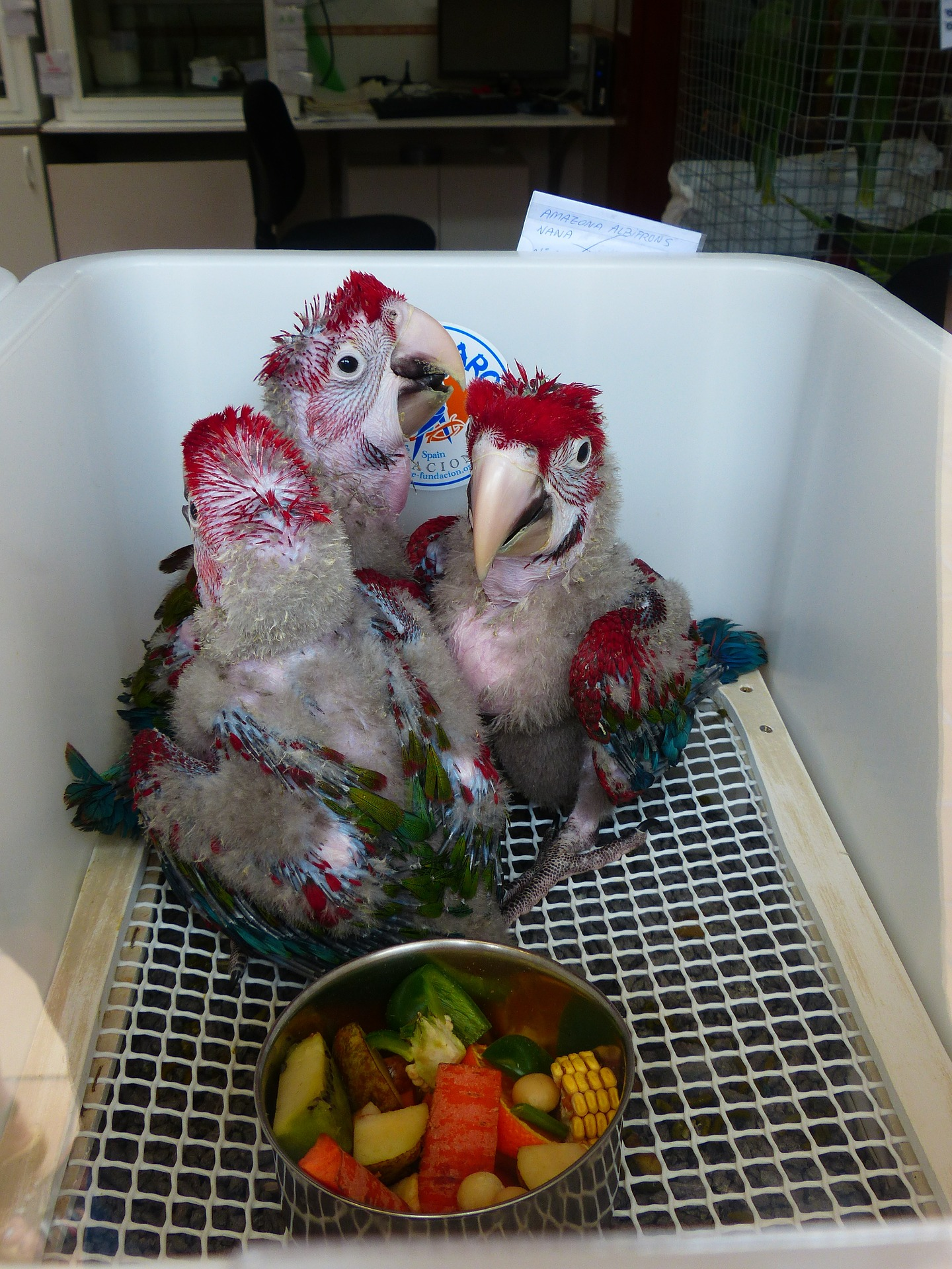 parrots-406794_1920.jpg
