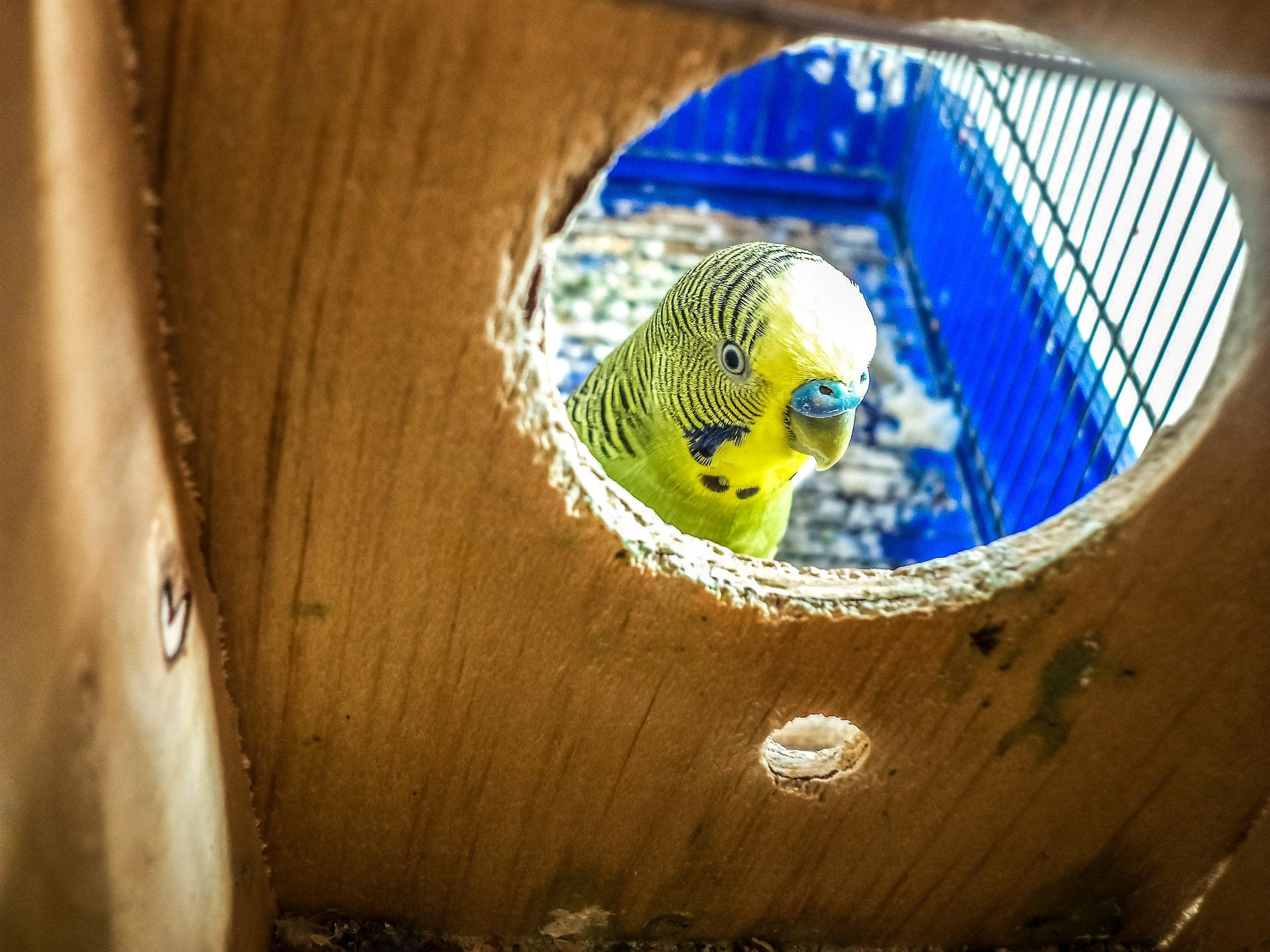 parrots-748781_1920.jpg