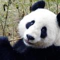 Lecsapott az ízléshatóság: Szalai Annamáriáék nem szeretik az állatos vicceket