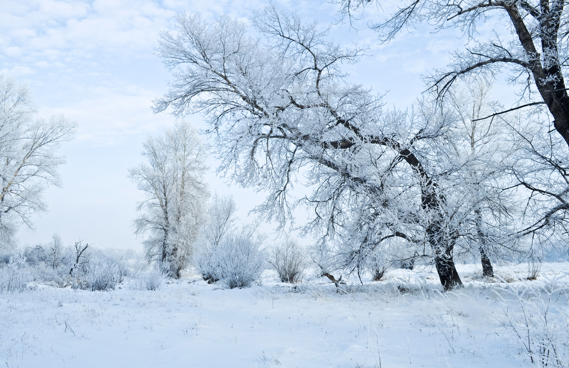 winter-and-forest.jpg