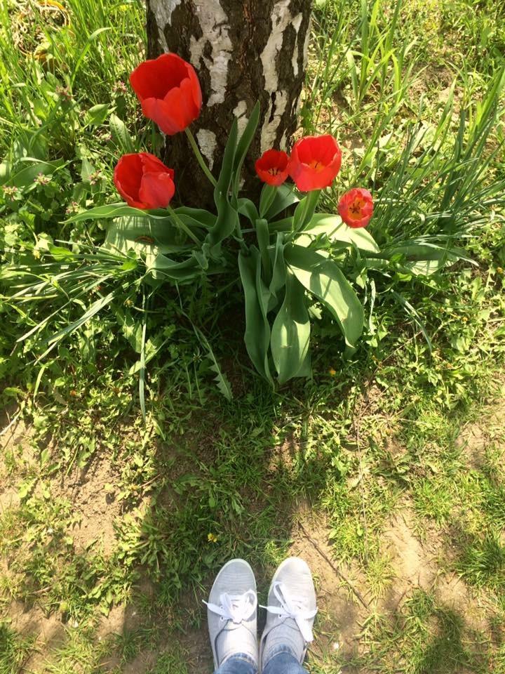 a_fa_a_tulipanok_verebiivettblog.jpg