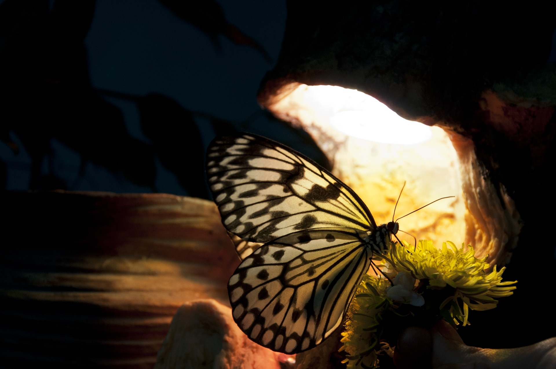 pillango.jpg