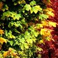 November 10. - Kosztolányi Dezső: Mostan színes tintákról álmodom