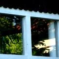 Október 17. - Petőfi Sándor: Beszél a fákkal a bús őszi szél