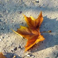 Szeptember 8. - Heltai Jenő: Üzent az ősz