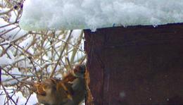 December 27. - Nemes Nagy Ágnes: Hóesésben