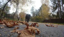 November 18. - Tamkó Sirató Károly: Késő ősz