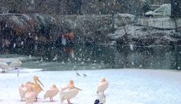 December 16. - Tóth Éva: Esik a hó