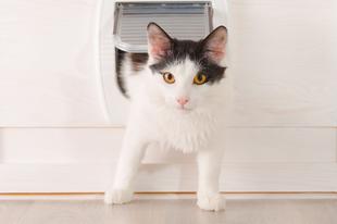 Macska a kapuk előtt, avagy egy intelligens otthonban a macskaajtó is okos