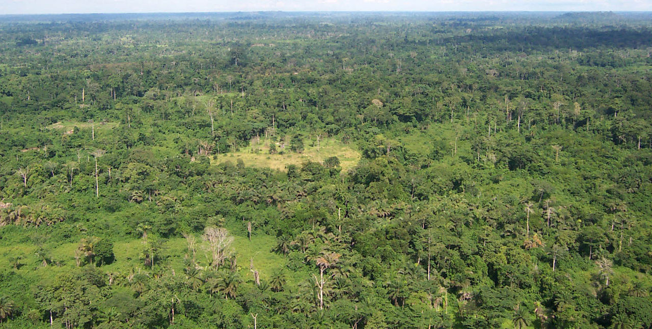 liberia_tropical_forest.jpg