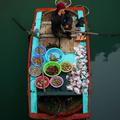 Segal és Vietnam
