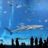 Óriás akváriumok