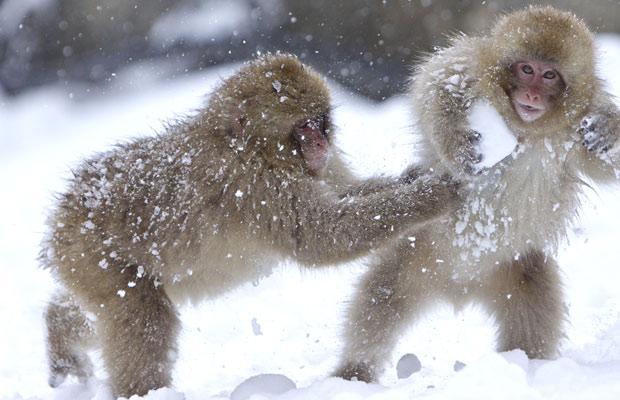 snow monkey6.jpg