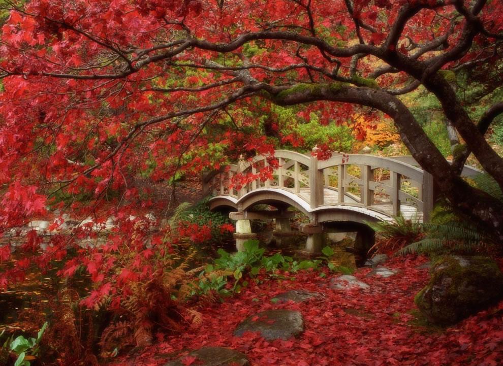 Japán juhar, Japanese Garden at Royal Roads University in British Columbia.jpg
