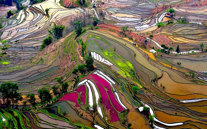 Rizsteraszok, Yunnan tartomány, Kína.jpg