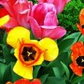 Ősszel ültessük el, hogy tavasszal szép legyen!