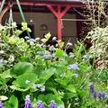 Szép kertek - Virágos pihenőkert