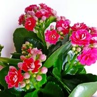 5 szobanövény, amelyben nem csalódhatunk
