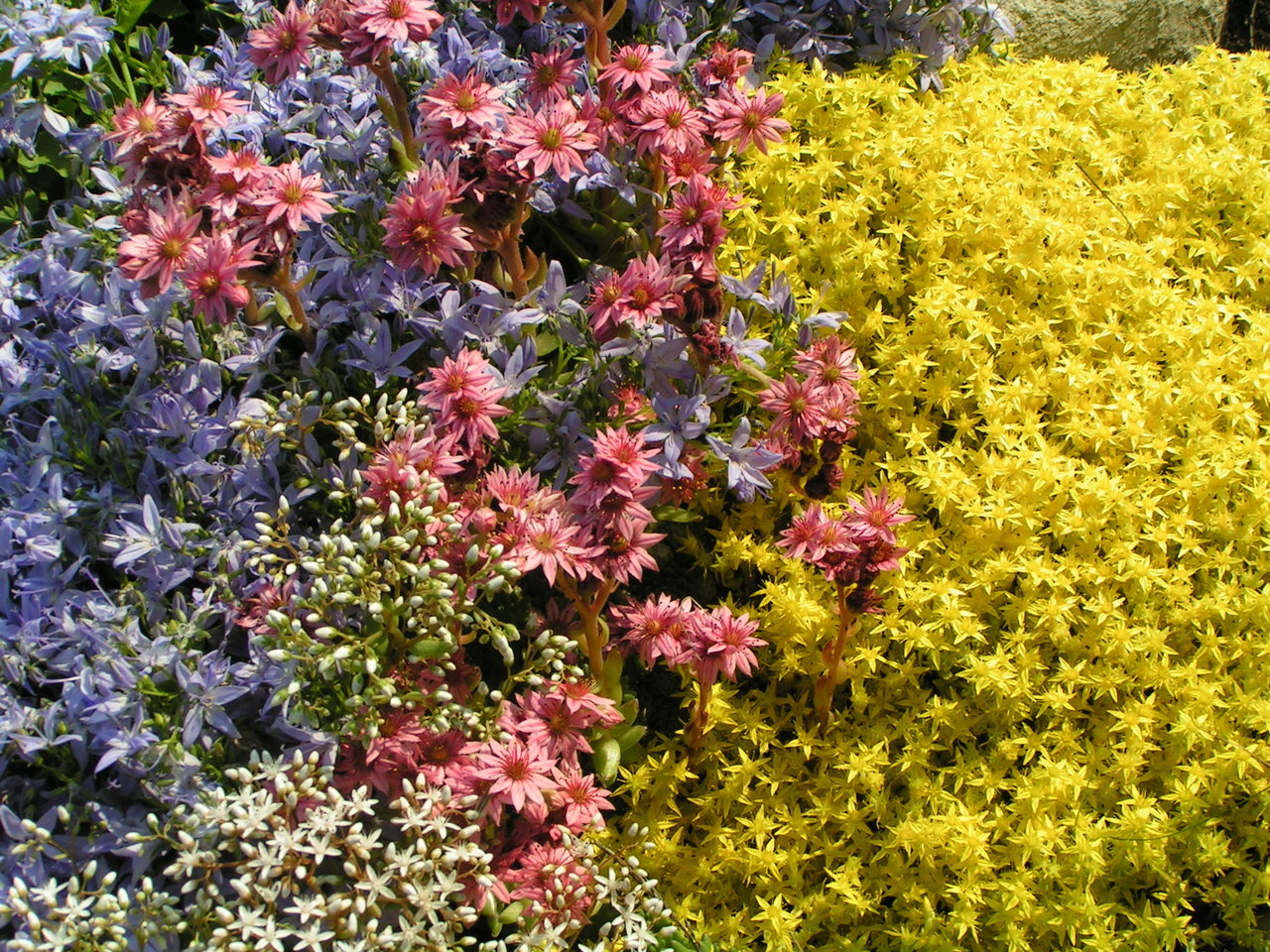 garden-flowers-1389057-1280x960.jpg