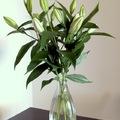 Kinyílik-e a liliom vázában?