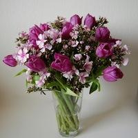 A tulipán és a phlox találkozása