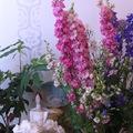 Virágláda virágbolt