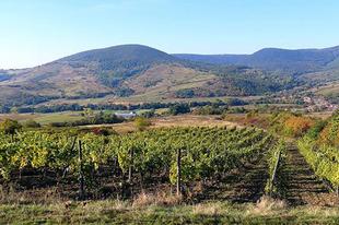 #autumn #morning  Photo by Sikolya Tibor #tokajwineregion #tokaji #tokaj #tokajiaszu #visittokaj #tokajhegyalja #tokajiborok #wines #vineyard #whitewines #winelover #instawine #summer #summertime #nature #naturephotography #instahungary #instahun #turatajolo #visithungary #UNESCO #unescoworldheritage #unescoworldheritagesite #instaphoto #pictureoftheday #picoftheday  @elmenyitthon