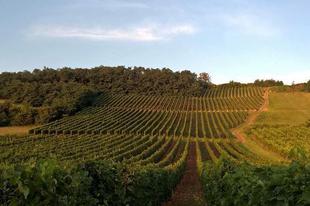 Good #morning  Photo by #Himesudvar #winery  #tokajwineregion #tokaji #tokaj #tokajiaszu #visittokaj #tokajhegyalja #tokajiborok #wines #vineyard #whitewines #winelover #instawine #summer #summertime #nature #naturephotography #instahungary #instahun #turatajolo #visithungary #UNESCO #unescoworldheritage #unescoworldheritagesite #instaphoto #pictureoftheday #picoftheday  @elmenyitthon