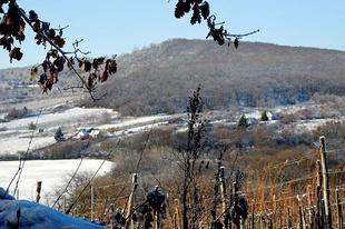 #Királyhegy Photo by Sóstói András #tokajwineregion #tokaji #tokaj #sarospatak #visittokaj #tokajhegyalja #frozen #winter #wintertime #nature #naturelover #naturepics #vineyard #instahungary #instahun #loves_hungary #visithungary #UNESCO #unescoworldheritage #unescoworldheritagesite #discoverglobe #instaphoto #pictureoftheday #picoftheday #mindekozben @hello_hungary @discoverglobe @szeretlekmagyarorszag.hu @winerylovers @gotohungary_official @patakapp @ilovehungarianwines @instasarospatak